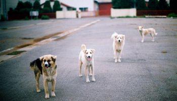 Stray dog's Power relationship