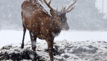 Heavy snow falls in West Lothian